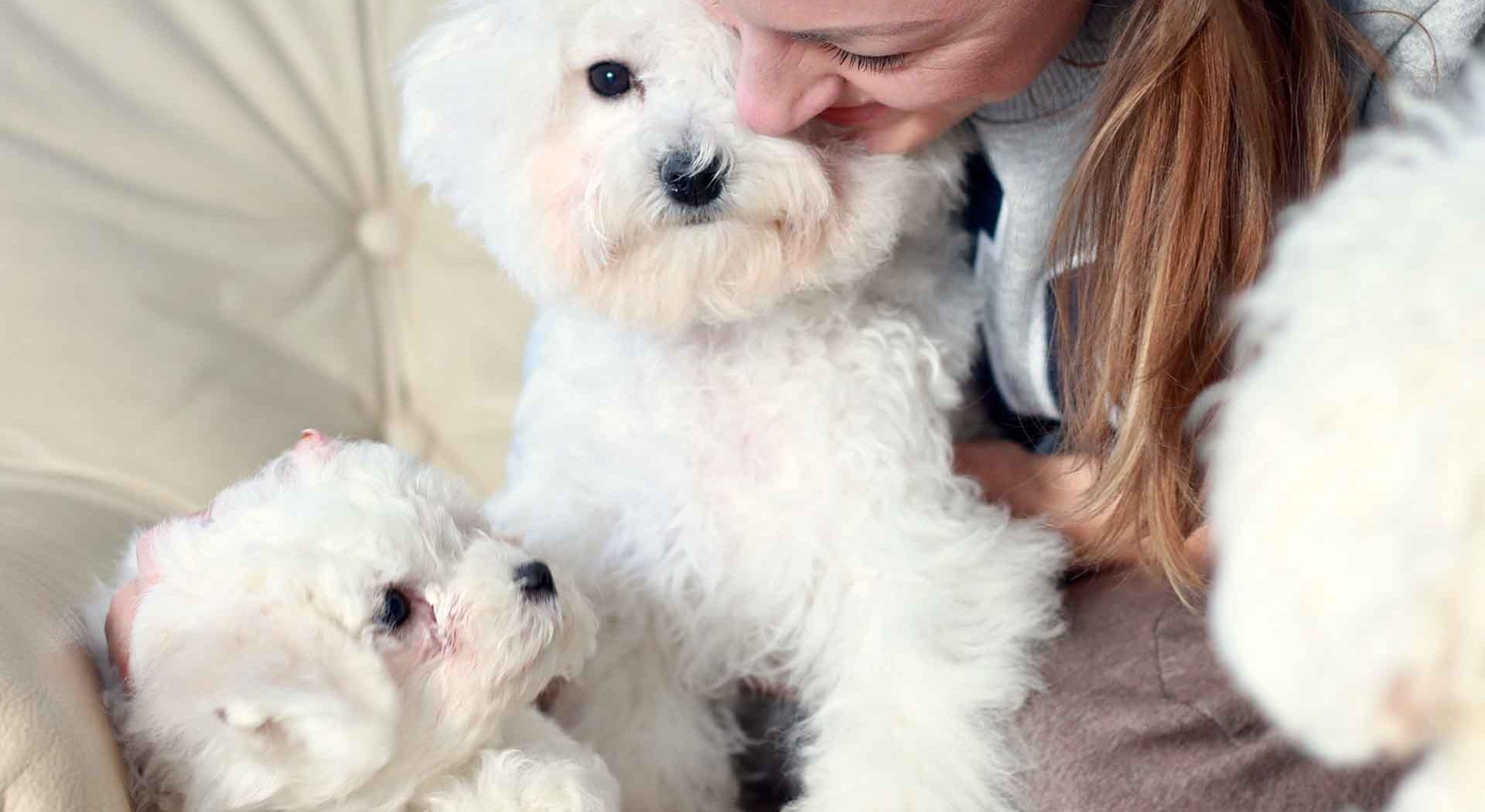 How to socialize your puppy during their first year